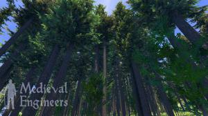 Wallpaper_Planet-Forests